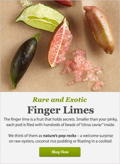 Rare and Exotic: Finger Limes - Shop Now