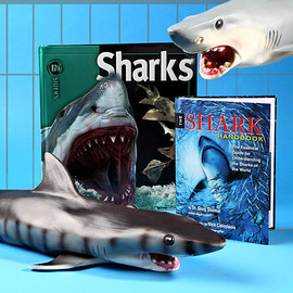 Shark Attack Collection