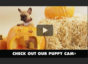 Check out our puppy cam.
