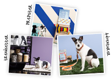 The Pet Shop Tail-Wagging Accessories & Apparel