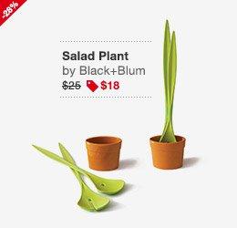Salad Plant Image