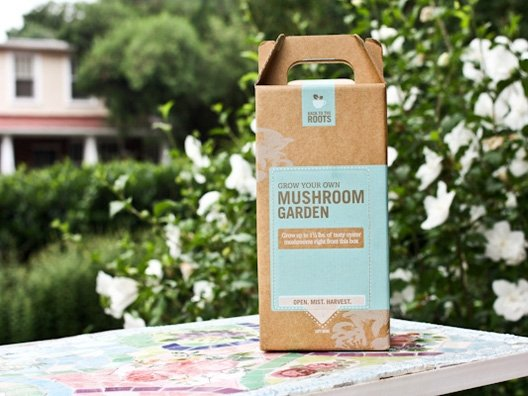 Grow Your Own Oyster Mushroom Kit from Kath Younger