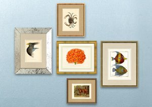 ARCHIVE: Natural History Prints from the 1800's