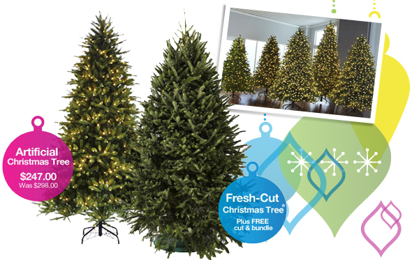 Shop Christmas Trees »