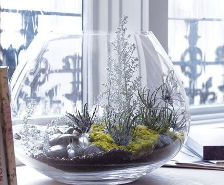 Crate And Barrel Our Favorite Terrarium Milled