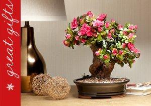Forever Green Art: Bonsai