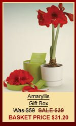 Amaryllis Gift Box | Was $59 | SALE $39 | Basket Price $31.20