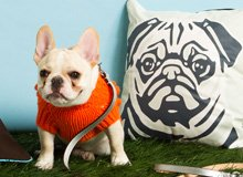 The Pet Shop Beds, Knit Sweaters, & More