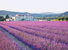 The Gourmet's Escape 5 Nights in Provence