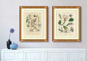 Antique Hand-Colored Botanicals