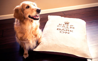 Whimsical Pet Pillows and Art - Visit Event