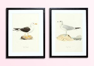 Vintage Herbatorium & Bird Prints