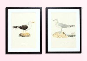 Vintage Herbatorium & Bird Prints