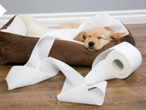 6 Easy Ways to Puppy-Proof Your Home