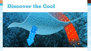 Discover the Cool