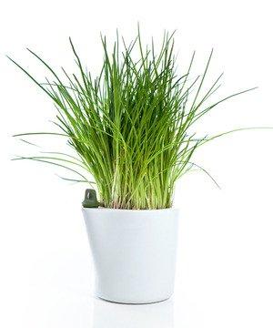Self Water Planter - Green