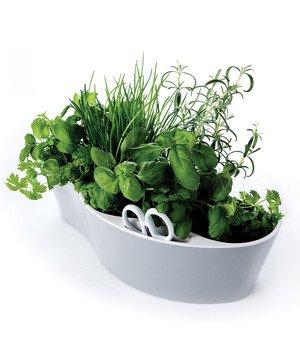 Indoor Herb Garden - White