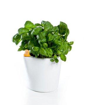 Self Water Planter - Orange