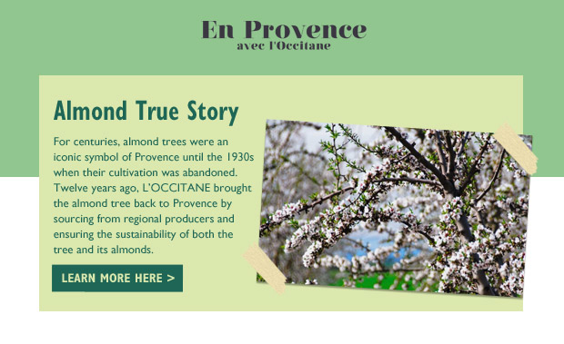For centuries, almond trees were an iconic symbol of Provence until the 1930s when their cultivation was abandoned.  Twelve years ago, L'OCCITANE brought the almond tree back to Provence by sourcing from regional producers and ensuring the sustainability of both the tree and its almonds.
