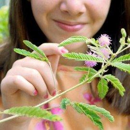 TickleMe Plant