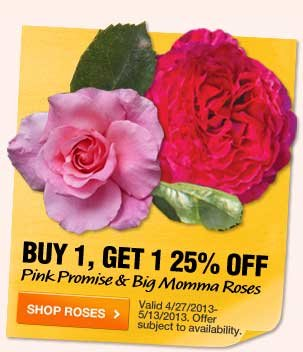 Buy 1, Get 1 25% OFF Pink Promise & Big Momma Roses