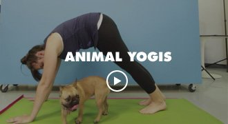 Animal Yogis