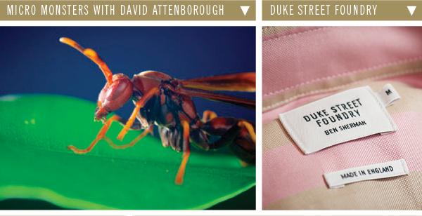 Micro Monsters with David Attenborough | Duke Street Foundry