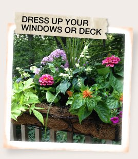Dress Up Your Windows or Deck