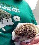 Hedgehogs Don't Share