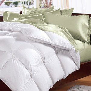 The Down Shop: Fluffy Pillows, Comforters, & More
