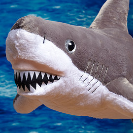 Sharks in the Water: Toys & Books