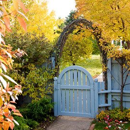 Backyard Oasis: Autumn Accents