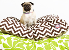 The Pet Shop Tail-Wagging Accessories & Décor