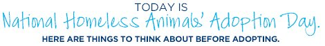 TODAY IS National Homeless Animals' Adoption Day. HERE ARE THINGS TO THINK ABOUT BEFORE ADOPTING.