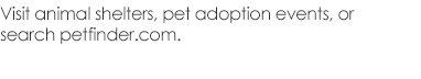 Visit animal shelters, pet adoption events, or search petfinder.com.