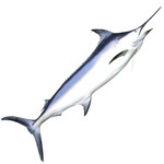 CleanFish