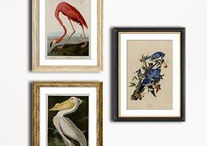 MyHabit Masters: John James Audubon