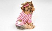 The Pets We Love | Shop Now