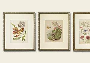 ARCHIVE: Original Botanical Lithographs