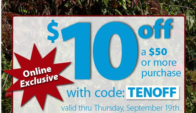Online Exclusive $10 off $50 with promo code TENOFF