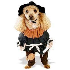 Spooky Sidekicks: Pet Costumes