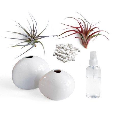 Lushmodern Airplant Pebble-Vase Pair