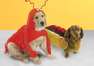 Howl-o-ween: Pet Costumes