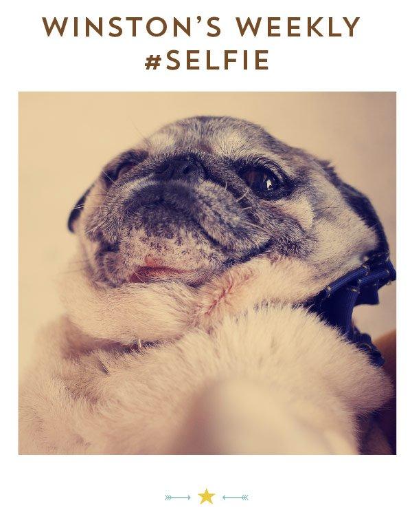 Winston's Weekly Selfie