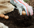 Fall Planting Video: 3 Quick Tips for Fall Planting