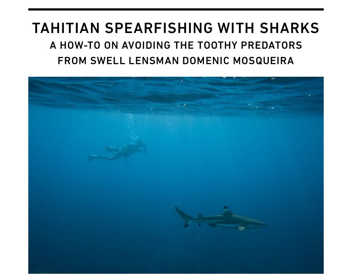 Spearfishing With Sharks In Tahiti
