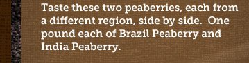 Taste these two peaberries, each from a different region, side by side. One pound each of Brazil Peaberry and India Peaberry.