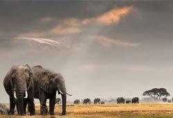 VISIT WEST AFRICA