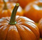 Pumpkin_FL_604