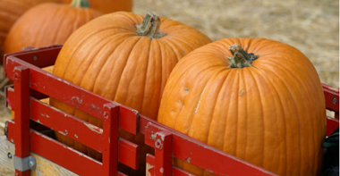 Pumpkins_NL